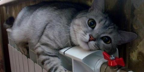 Замените уплотнитель на окнах - спасите котика