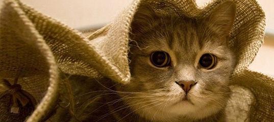 заказывайте кота в мешке
