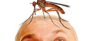 комариный писк мешает спать
