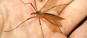 москитная сетка защищает от комаров